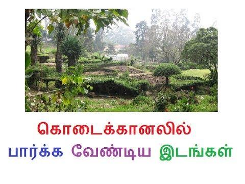 கொடைக்கானலில் பார்க்க வேண்டிய  இடங்கள் places to visit in kodaikanal tamil