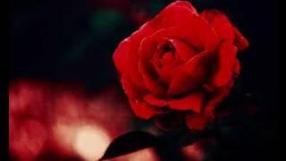korg pa50 rai instrumental - Baida mon amour cheb hasni