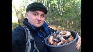 ГРИБОВ ХВАТИТ ВСЕМ! Белые грибы, маслята, подосиновики в конце сентяря.