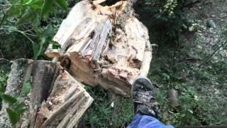 Casse d'un arbre avec mon pieds