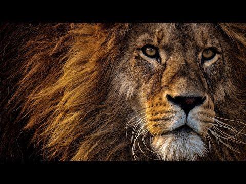 Документальный фильм про львов (National Geographic )