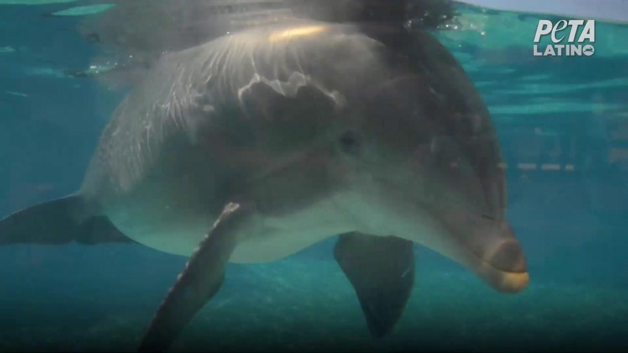SeaWorld no quiere que sepas que drogan y abusan sexualmente de los delfines