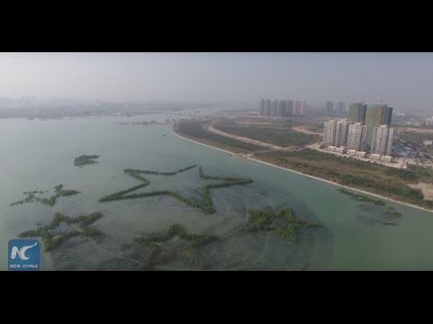 """Turning tide on mangrove loss in China in a """"beautiful"""" way"""