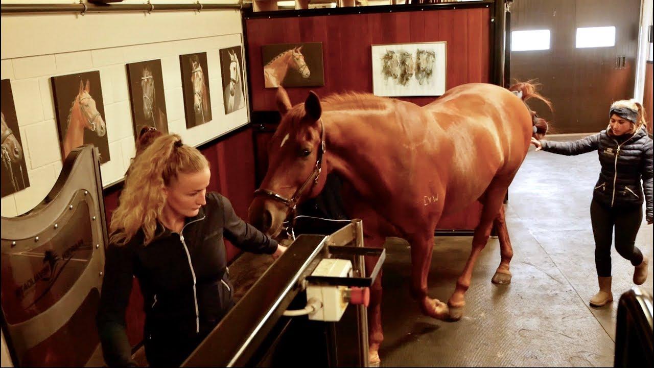 dressage-horse-tries-aquatrainer-part-1-matt-harnacke