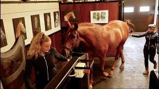 DRESSAGE HORSE TRIES AQUATRAINER PART 1|| MATT HARNACKE