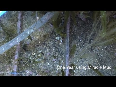 Ecosystem MiracleMud - A Year ReefKeeping Video Podcast by AmericanReef - Start a Saltwater Aquarium