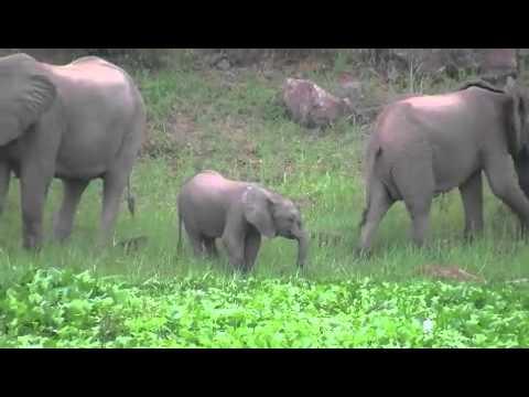 Zimbabwe Houseboat & Safari