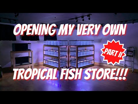 Opening My Very Own TROPICAL FISH SHOP! Part II
