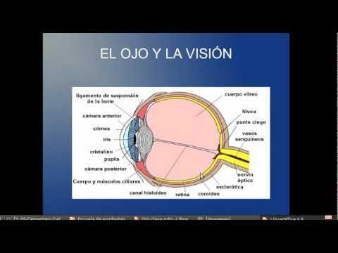 Histología del Ojo Humano - YouTube