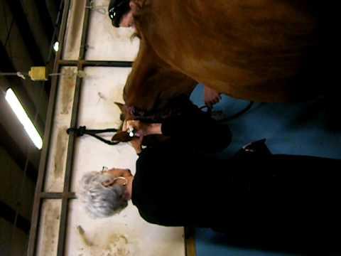 Michelle Deck-Mare head tossing.AVI