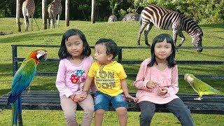 Rei dan Keluarga Pergi ke Kebun Binatang Jurug Solo 2019