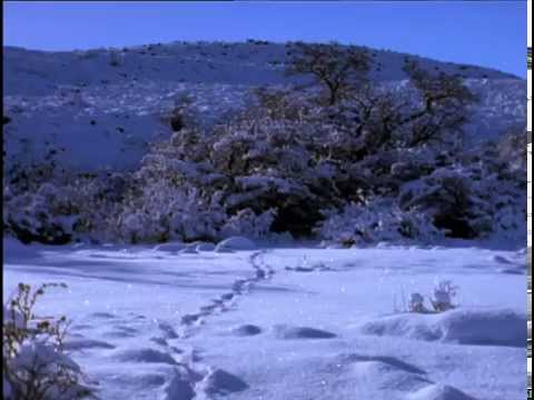 Puma. The Lion of the Andes - National Geographic - Part 2