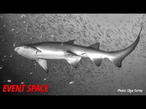 Getting Started in Underwater Imaging