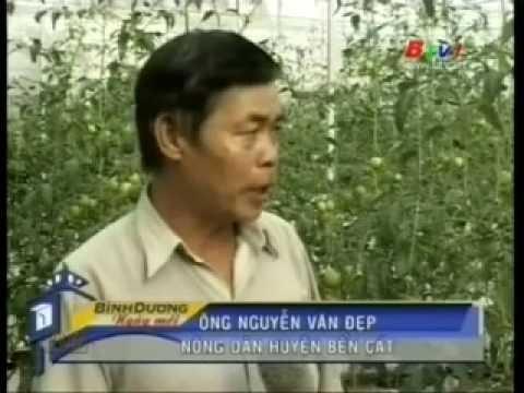 Vietnam Cooperative Alliance Television - Mô hình nông nghiệp công nghệ cao
