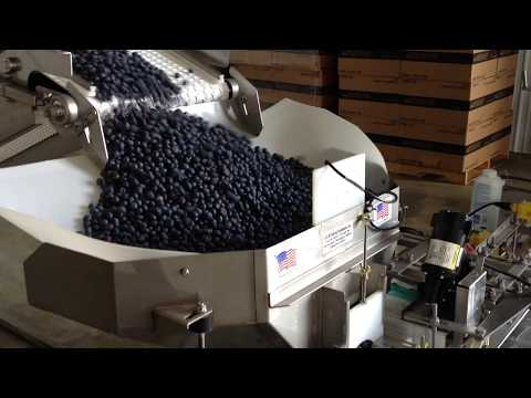 Blueberry Packing Machine - DiMeo Blueberry Farms