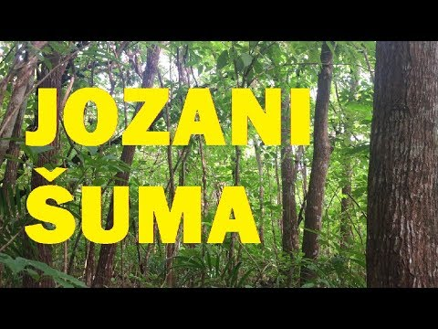 JOZANI ŠUMA - Putopis 090