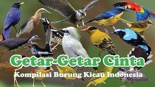 Kompilasi 100 Burung Kicau Indonesia