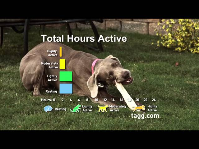 Tagg™ - Activity Tracking