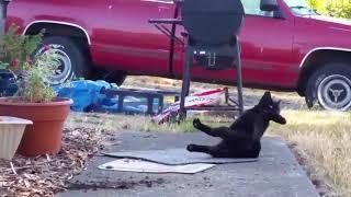 РЕАЛЬНЫЙ РЖАЧ Смешное видео Животные обезьяны коты собаки Приколы FUNNY CATS DOGS MONKEYS