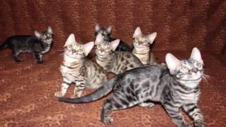 ТОП 5 самые красивые породы кошек