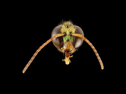 Landscape Maintenance Practices for Native Bees   2 1 18