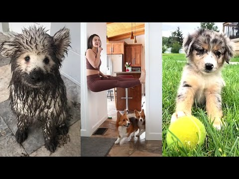 Funny Dogs of TIKTOK Compilation ~ Nothing Cuter Than Cute Little Puppies