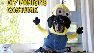 How To Make The Minions Small Dog Costume | Diy Costume