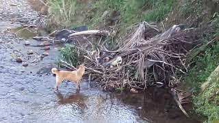 Salir hacia el río para buscar piedras y miren la escena que encontré.