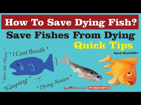 How To Save Dying Fish Quick Tips & Guide How To Save Injured Sick Fish