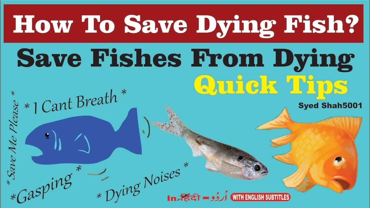 How to save fish