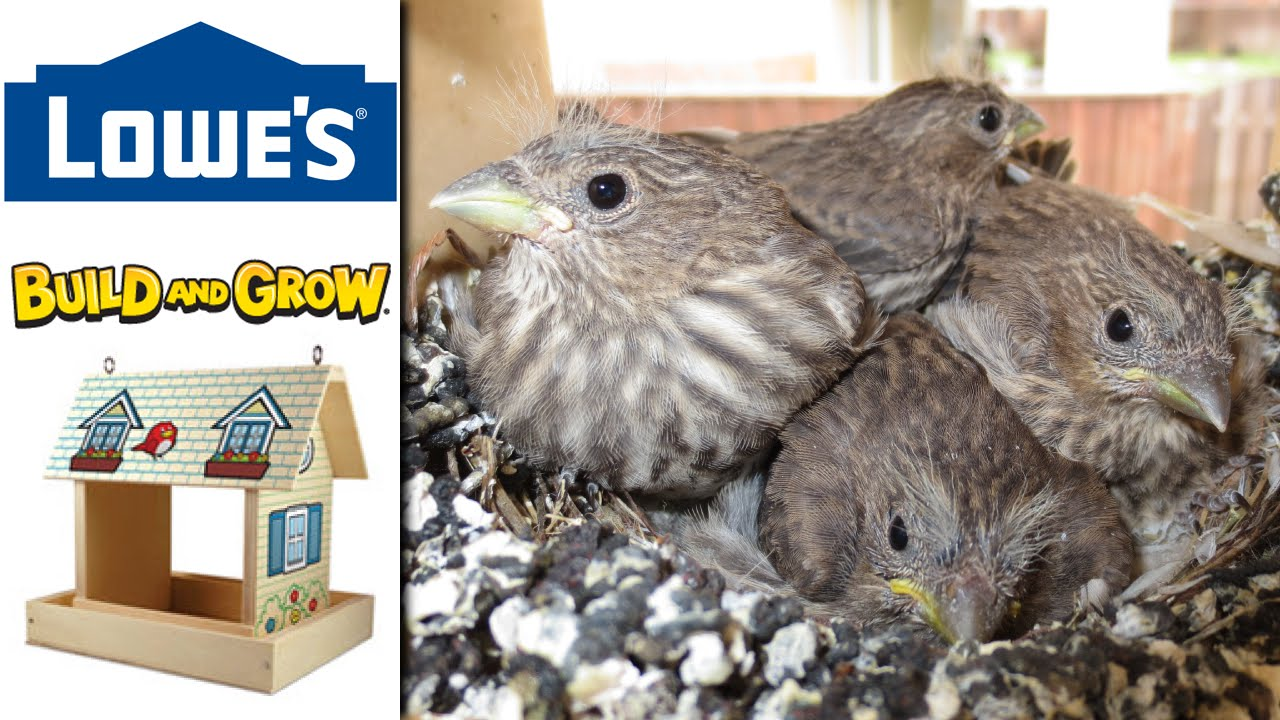 Lowes Build Grow Bird Feeder Or House