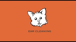 How to Clean a Yorkie's Ears: Cleaning Orius' Ears