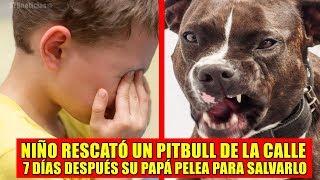Niño llevó a su casa a un perro Pitbull, días después papá pelea para salvarlo