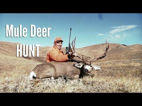 Monster Montana Mule Deer Hunt!