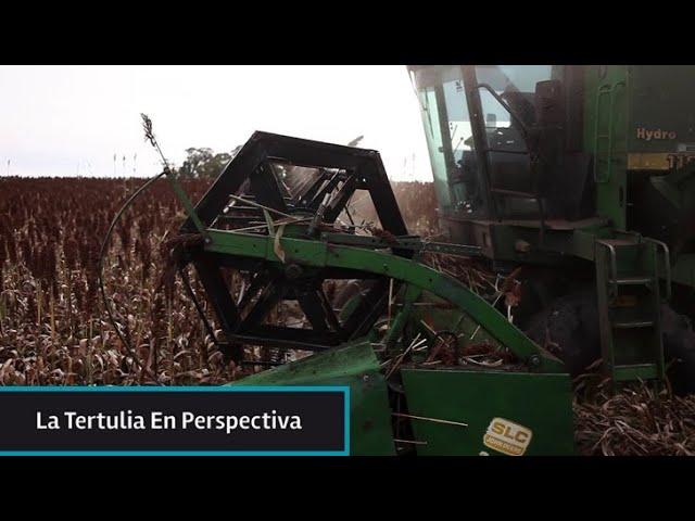 ¿Se viene un boom de los commodities agropecuarios? ¿Cómo puede aprovecharlo Uruguay?