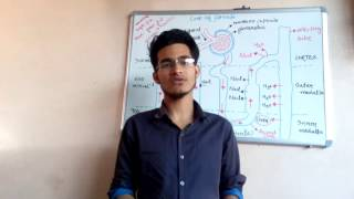 Mechanism of concentration of filtrate (counter current mechanism) for all biology exams.