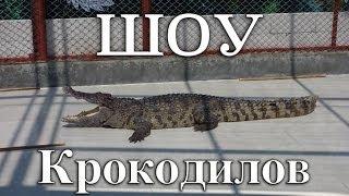 [Пхукет] Шоу крокодилов