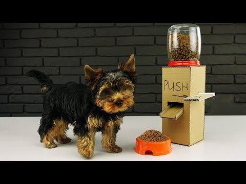 Thumbnail: DIY Puppy Dog Food Dispenser from Cardboard at Home