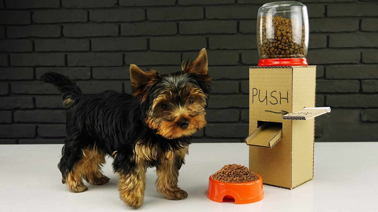 DIY Puppy Dog Food Dispenser from Cardboard at Home. The Q