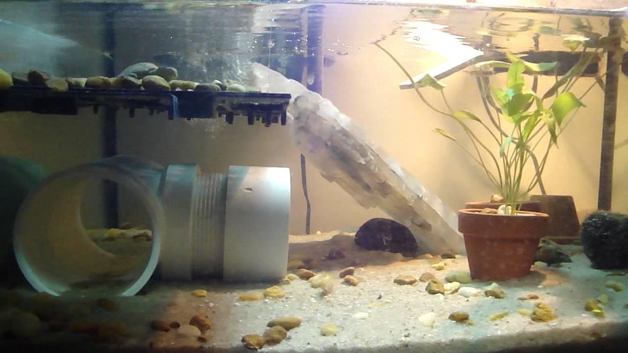 My 3-Stripe Mud Turtle tank setup - YouTube