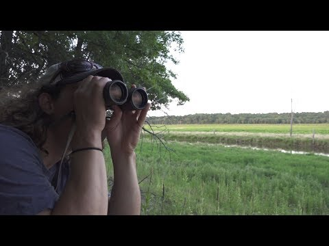 BUCKS IN THE CORN - PUBLIC LAND SCOUTING