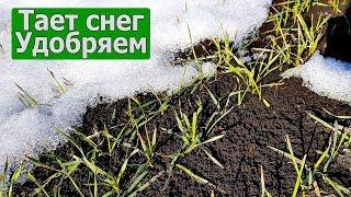 Подкормка озимой пшеницы по мерзло-талой почве аммиачной селитрой. СельхозТехникаТВ