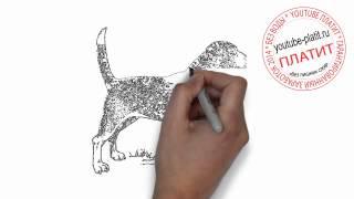 Нарисованные карандашом собаки   Как нарисовать карандашом поэтапно преданую собаку
