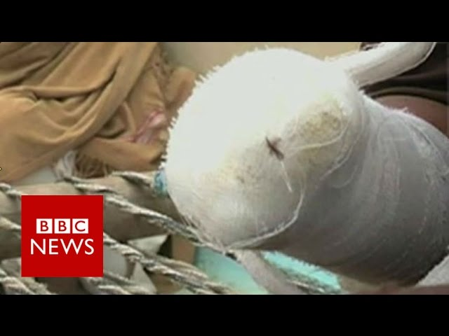 'I do not regret chopping off my hand' - BBC News