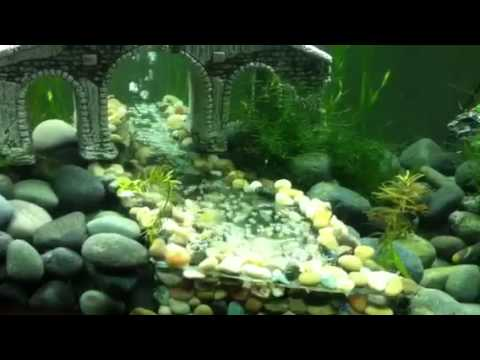 DIY aquarium bubble river - YouTube