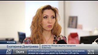 Закон о защите животных впервые приняли в России
