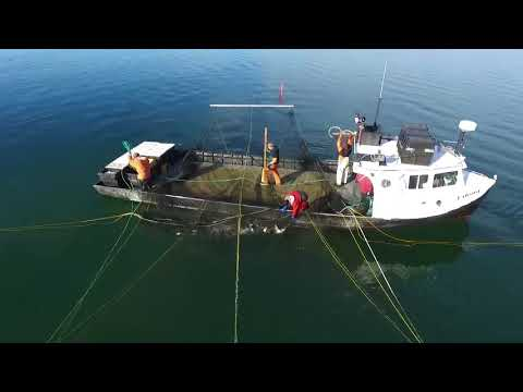 Viking At Fairport,Mi lifting Trap Nets To End Whitefish Season Lake Michigan
