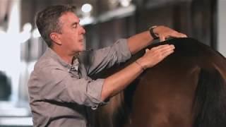 Equine Back Clinical Exam: SonoSite Veterinary Education