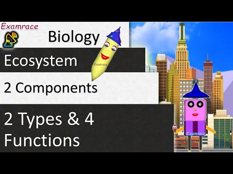 Life in a Ecosystem - 2 Components, 2 Types and 4 Functions
