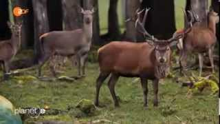 Über die Jagd - Töten darf auch Freude machen